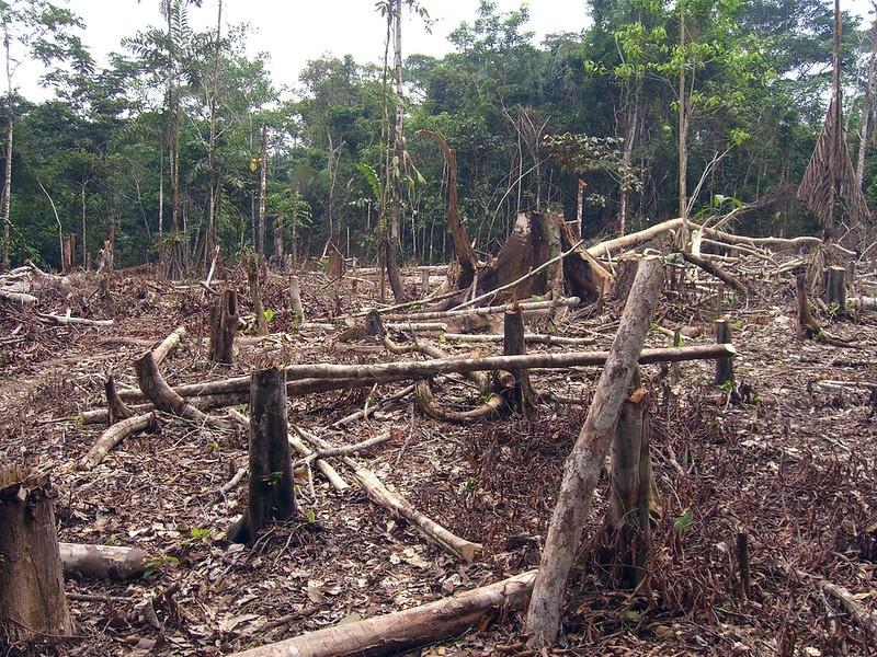 L'importance économique et les impacts environnementaux de la palme africaine